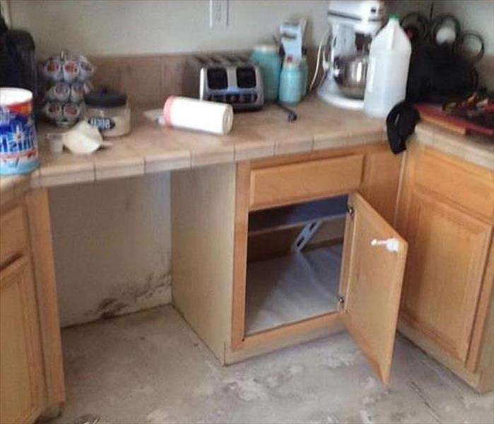 A Moldy Kitchen Problem in Wheaton Before