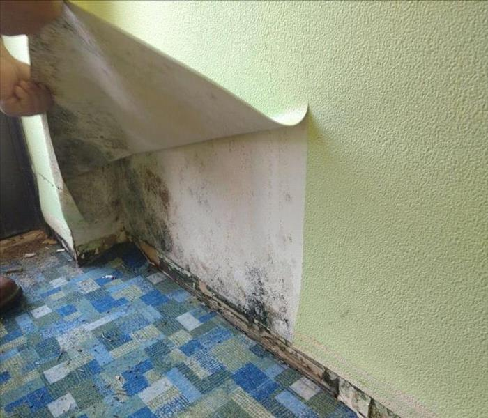Glendale Heights and a Mold Problem