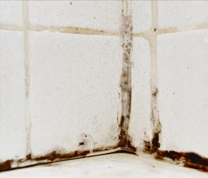 Mold Remediation Understanding Mold Damage in Bloomingdale