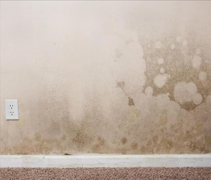 Mold Remediation Finding And Controlling Mold Damage in Carol Stream Homes
